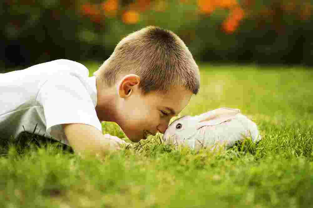 How Pets Teach Children